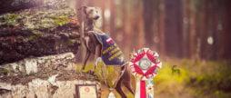 mistrzostwa polski w coursingu charcik włoski
