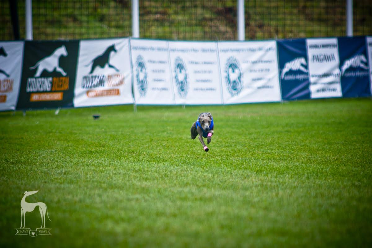 charcik włoski wyścigi
