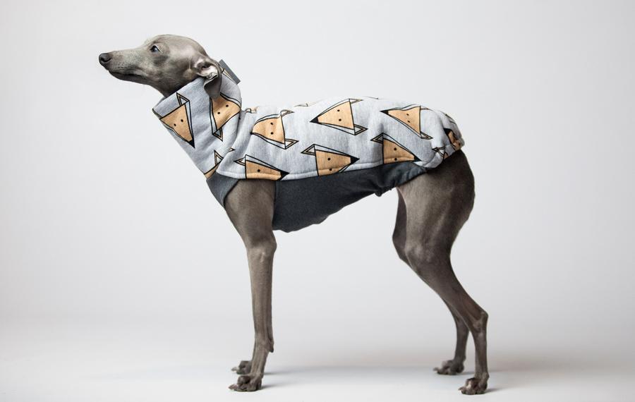 Italian greyhound clothes | charcikiwloskie.pl | italian ...