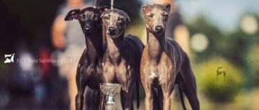charcki włoskie euro sighthound