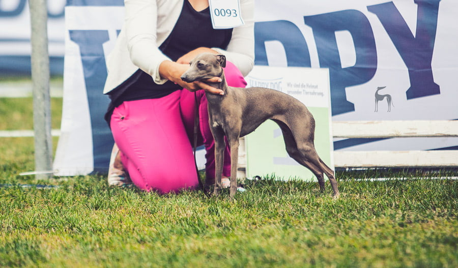 Donaueschingen Sighthound Festival