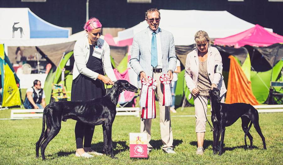 Donaueschingen Sighthound Festival 2017 galgo
