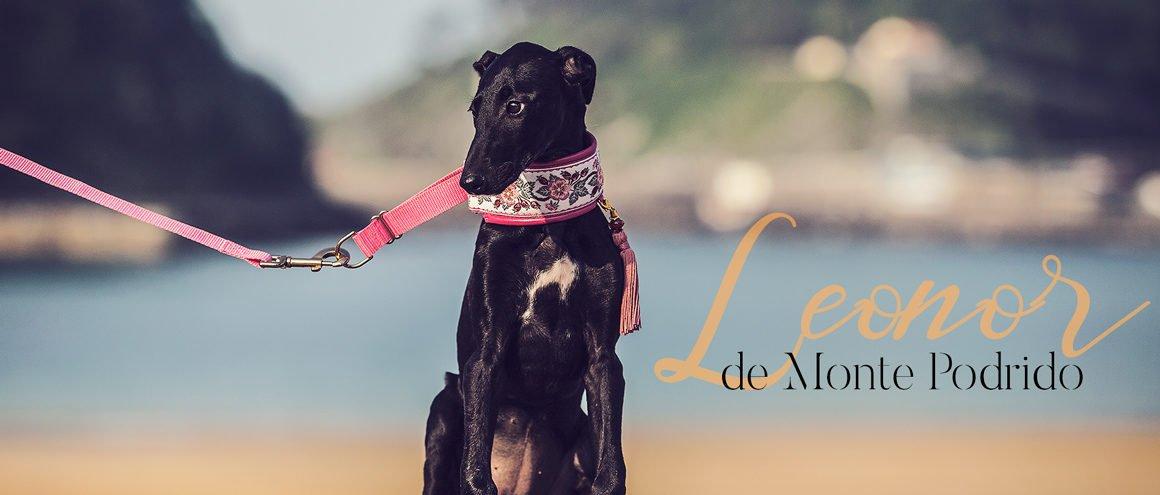 Nasza hiszpańska Leonor